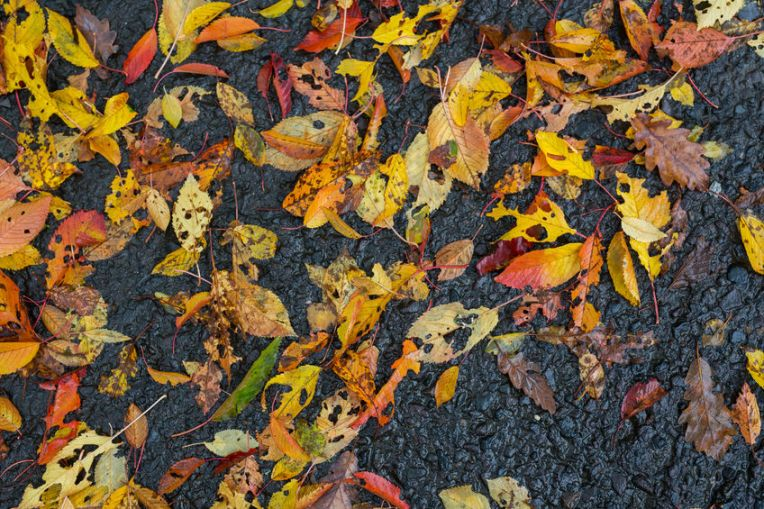 47224889 - autumn red and yellow wet leaves on asphalt sidewalk